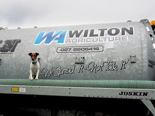 Wilton-Agriculture-dog